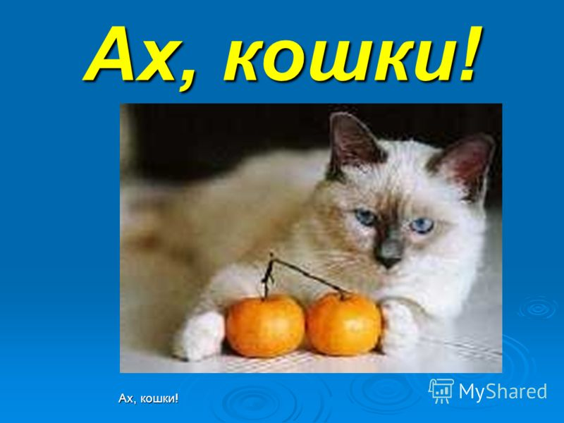 Ах, кошки!