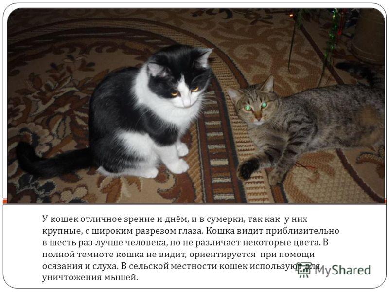 У кошек отличное зрение и днём, и в сумерки, так как у них крупные, с широким разрезом глаза. Кошка видит приблизительно в шесть раз лучше человека, но не различает некоторые цвета. В полной темноте кошка не видит, ориентируется при помощи осязания и