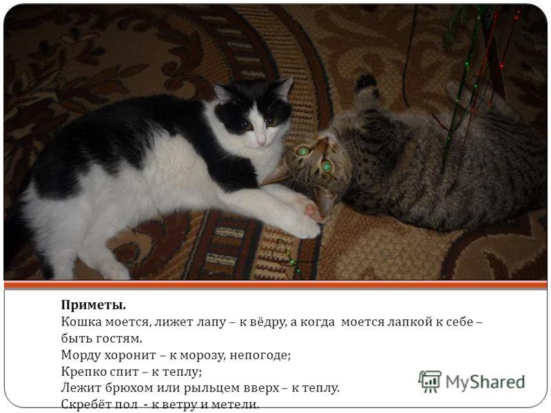 Приметы. Кошка моется, лижет лапу – к вёдру, а когда моется лапкой к себе – быть гостям. Морду хоронит – к морозу, непогоде ; Крепко спит – к теплу ; Лежит брюхом или рыльцем вверх – к теплу. Скребёт пол - к ветру и метели.