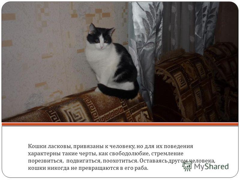 Кошки ласковы, привязаны к человеку, но для их поведения характерны такие черты, как свободолюбие, стремление порезвиться, подвигаться, поохотиться. Оставаясь другом человека, кошки никогда не превращаются в его раба. Плохое, недоброжелательное обращ
