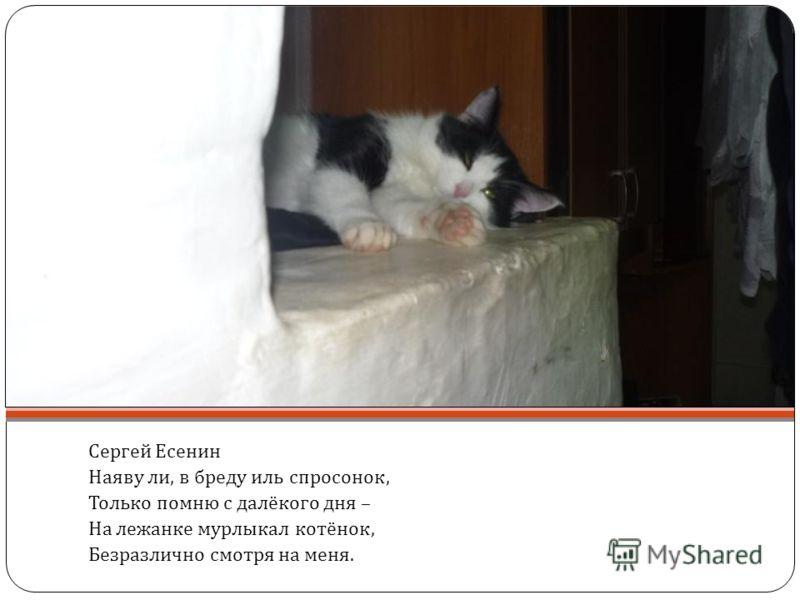Сергей Есенин Наяву ли, в бреду иль спросонок, Только помню с далёкого дня – На лежанке мурлыкал котёнок, Безразлично смотря на меня.