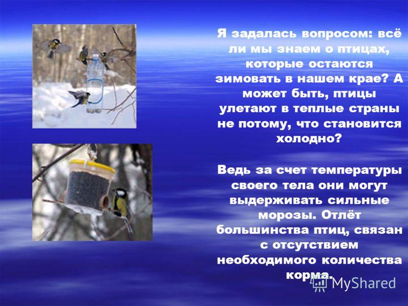 Я задалась вопросом: всё ли мы знаем о птицах, которые остаются зимовать в нашем крае? А может быть, птицы улетают в теплые страны не потому, что становится холодно? Ведь за счет температуры своего тела они могут выдерживать сильные морозы. Отлёт бол