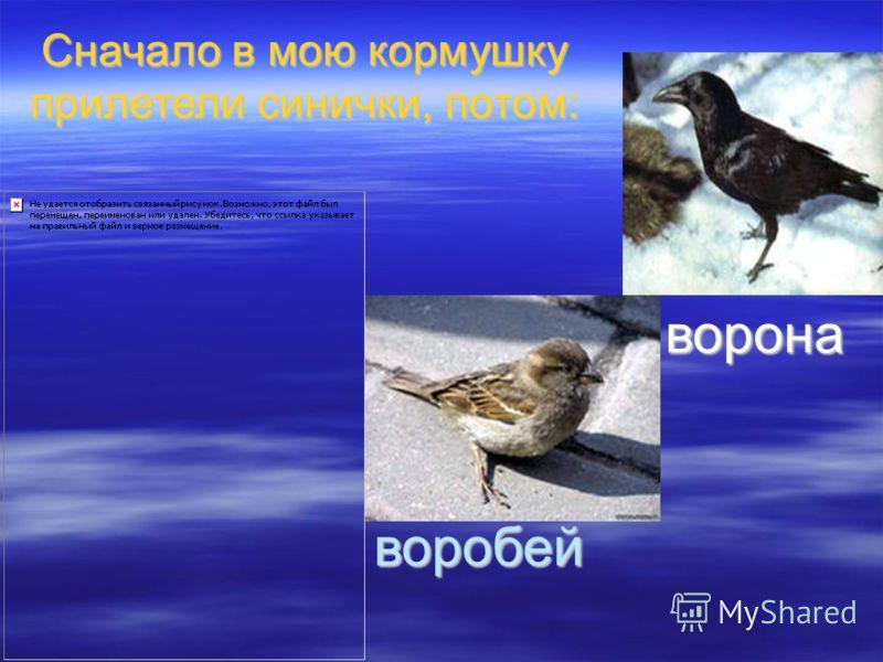 ворона воробей Сначало в мою кормушку прилетели синички, потом: