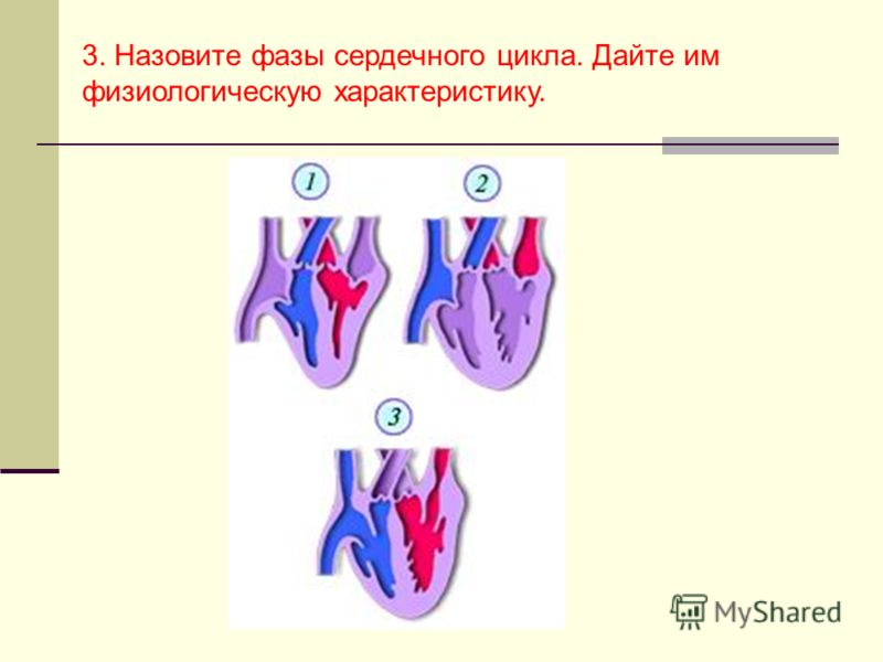 3. Назовите фазы сердечного цикла. Дайте им физиологическую характеристику.
