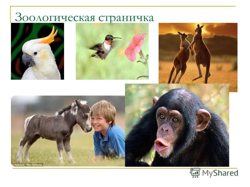 Зоологическая страничка