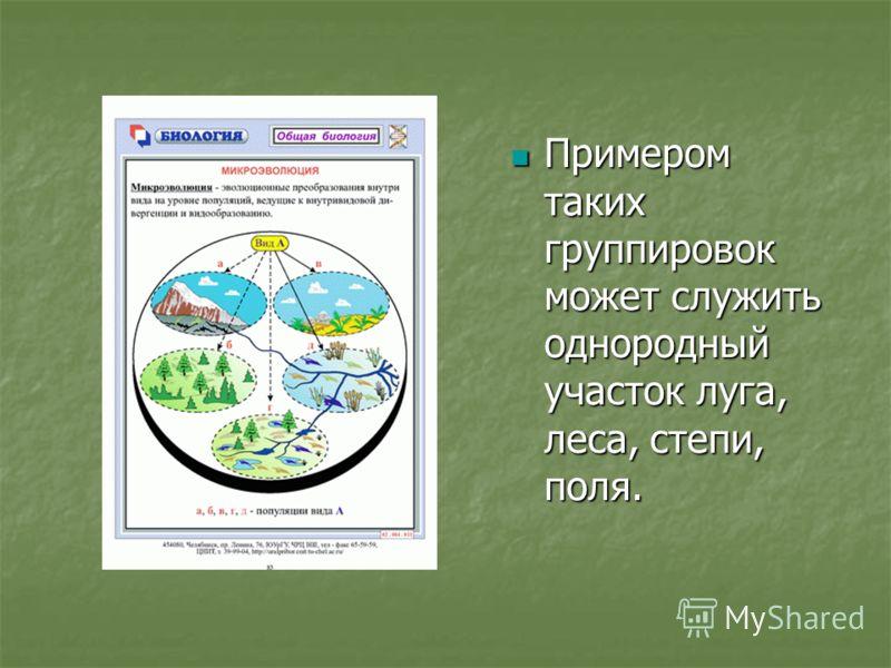Примером таких группировок может служить однородный участок луга, леса, степи, поля. Примером таких группировок может служить однородный участок луга, леса, степи, поля.