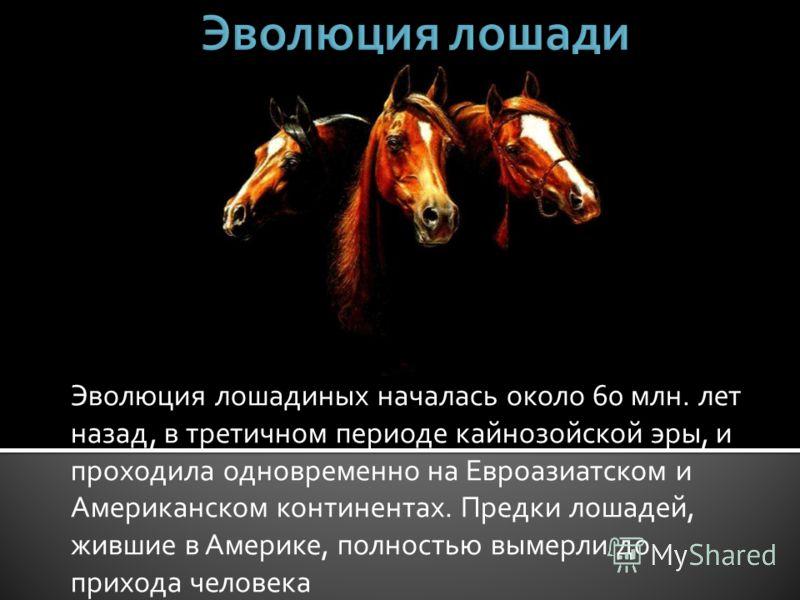 Эволюция лошадиных началась около 60 млн. лет назад, в третичном периоде кайнозойской эры, и проходила одновременно на Евроазиатском и Американском континентах. Предки лошадей, жившие в Америке, полностью вымерли до прихода человека