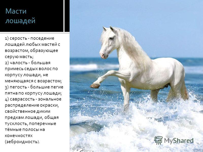 Масти лошадей 1) серость - поседение лошадей любых мастей с возрастом, образующее серую масть; 2) чалость - большая примесь седых волос по корпусу лошади, не меняющаяся с возрастом; 3) пегость - большие пегие пятна по корпусу лошади; 4) саврасость -
