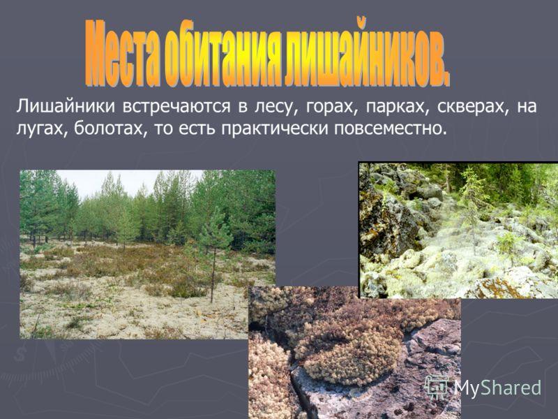 Лишайники встречаются в лесу, горах, парках, скверах, на лугах, болотах, то есть практически повсеместно.