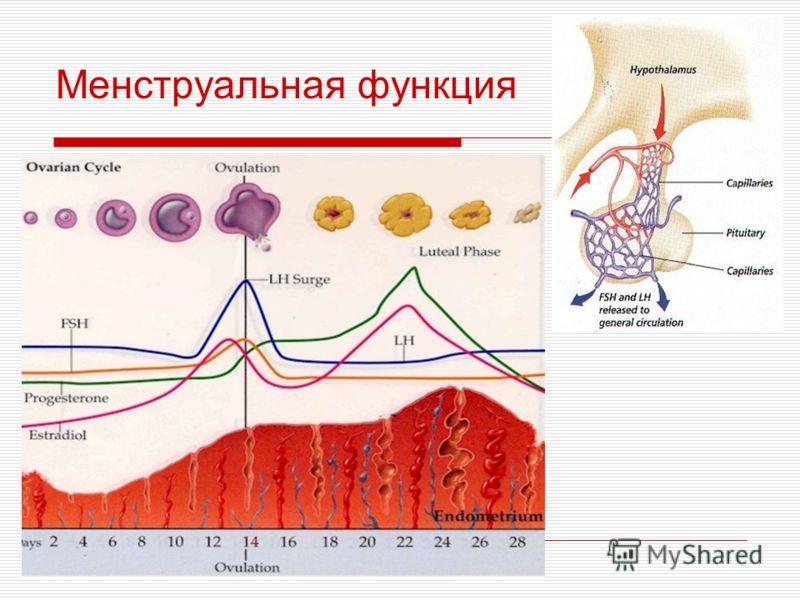 Менструальная функция