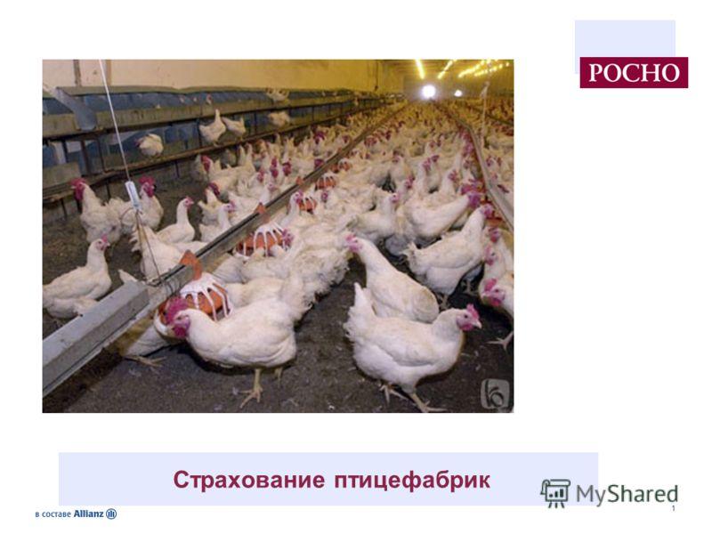1 Страхование птицефабрик