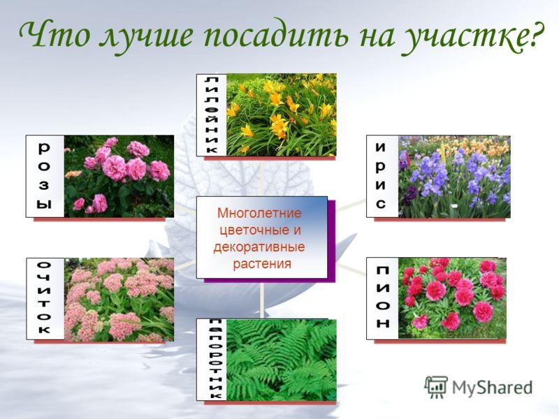 Что лучше посадить на участке? Многолетние цветочные и декоративные растения