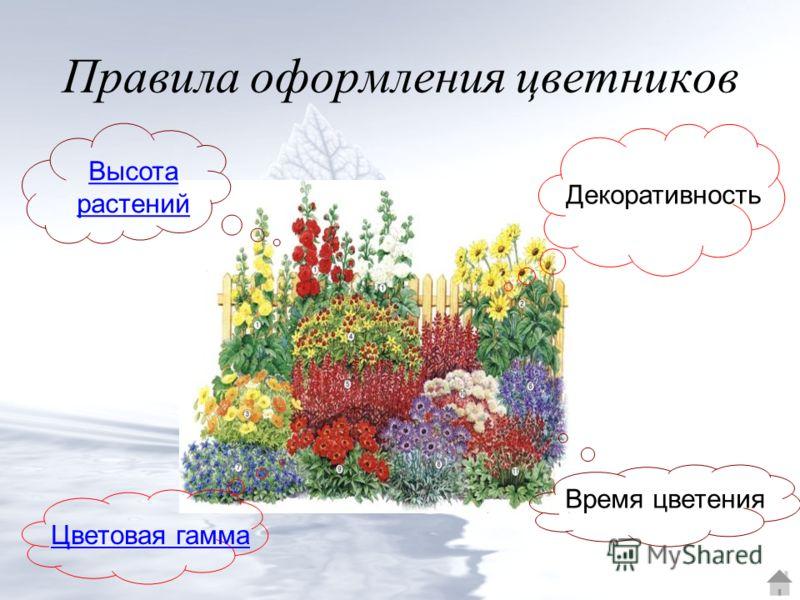 Правила оформления цветников Высота растений Декоративность Цветовая гамма Время цветения