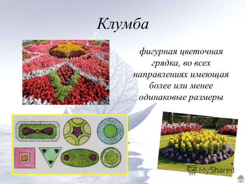 Клумба фигурная цветочная грядка, во всех направлениях имеющая более или менее одинаковые размеры