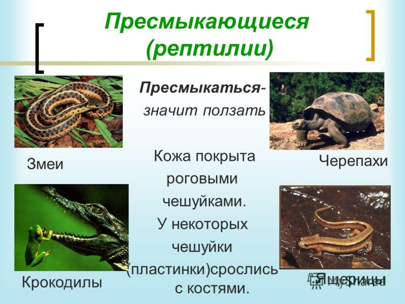 Сегодня мы познакомимся ещё с двумя группами животных: Земноводные Обитают и на земле, и в воде. В раннем возрасте живут в воде и дышат жабрами. Вырастая, теряют жабры и начинают дышать лёгкими. Кожа у них тонкая и влажная. Периодически её надо смачи