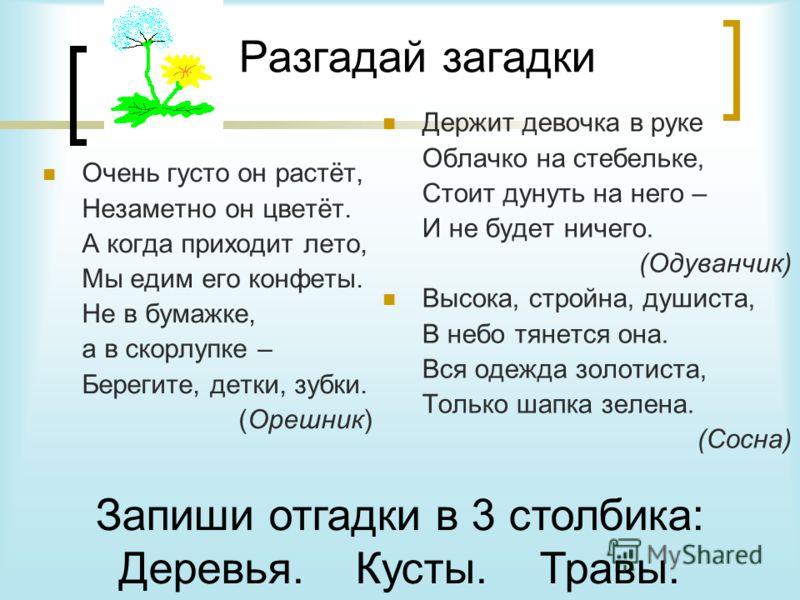 По виду и количеству стеблей, идущих от одного корня, растения можно разделить на три группы: Травы Деревья Кусты