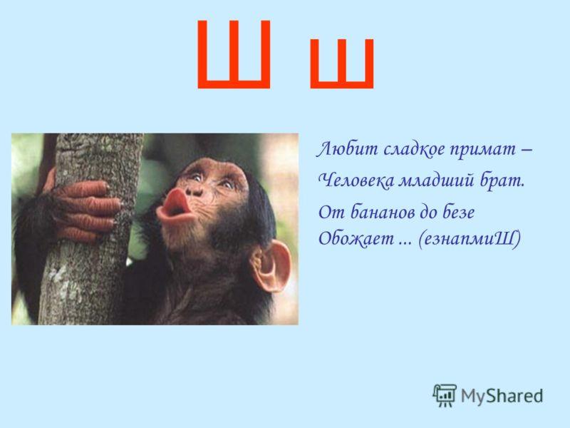 Ш ш Любит сладкое примат – Человека младший брат. От бананов до безе Обожает... (езнапмиШ)