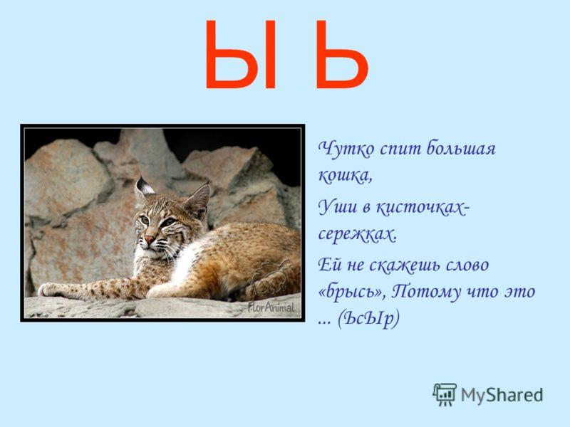 Ы Ь Чутко спит большая кошка, Уши в кисточках- сережках. Ей не скажешь слово «брысь», Потому что это... (ЬсЫр)