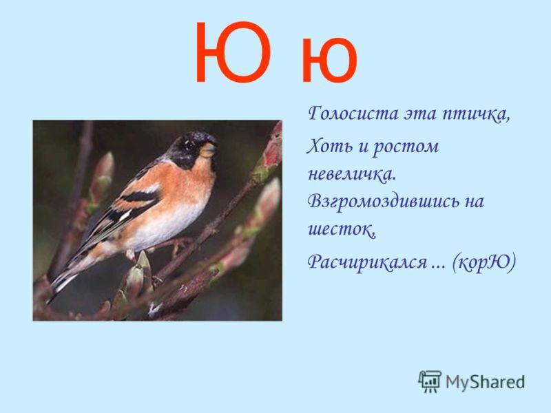 Ю ю Голосиста эта птичка, Хоть и ростом невеличка. Взгромоздившись на шесток, Расчирикался... (корЮ)