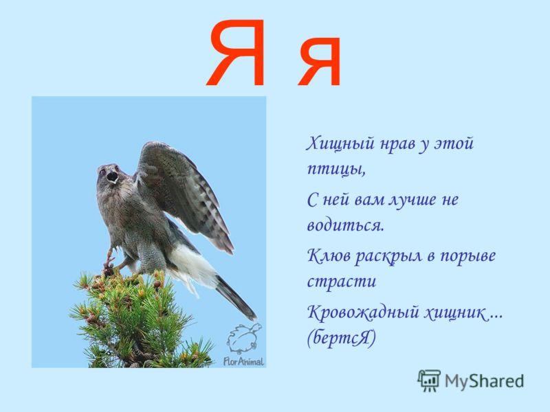 Я я Хищный нрав у этой птицы, С ней вам лучше не водиться. Клюв раскрыл в порыве страсти Кровожадный хищник... (бертсЯ)