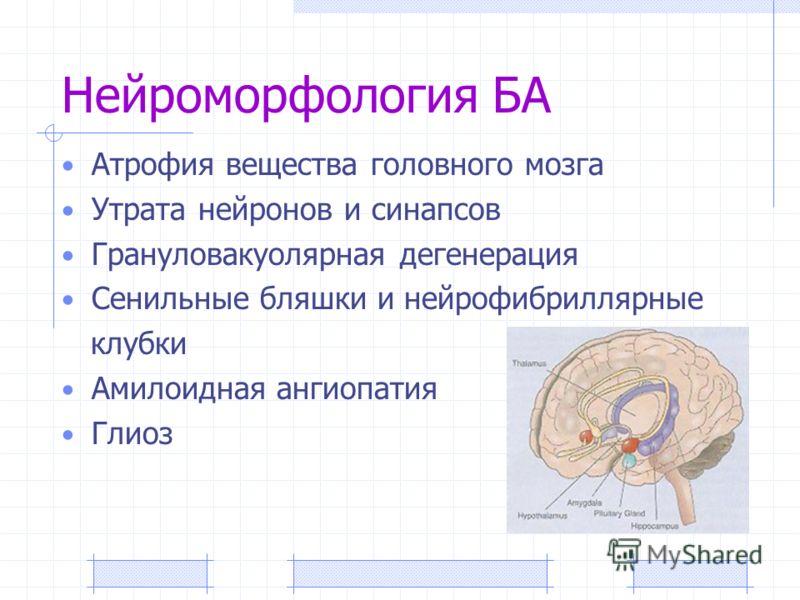 Нейроморфология БА Атрофия вещества головного мозга Утрата нейронов и синапсов Грануловакуолярная дегенерация Сенильные бляшки и нейрофибриллярные клубки Амилоидная ангиопатия Глиоз