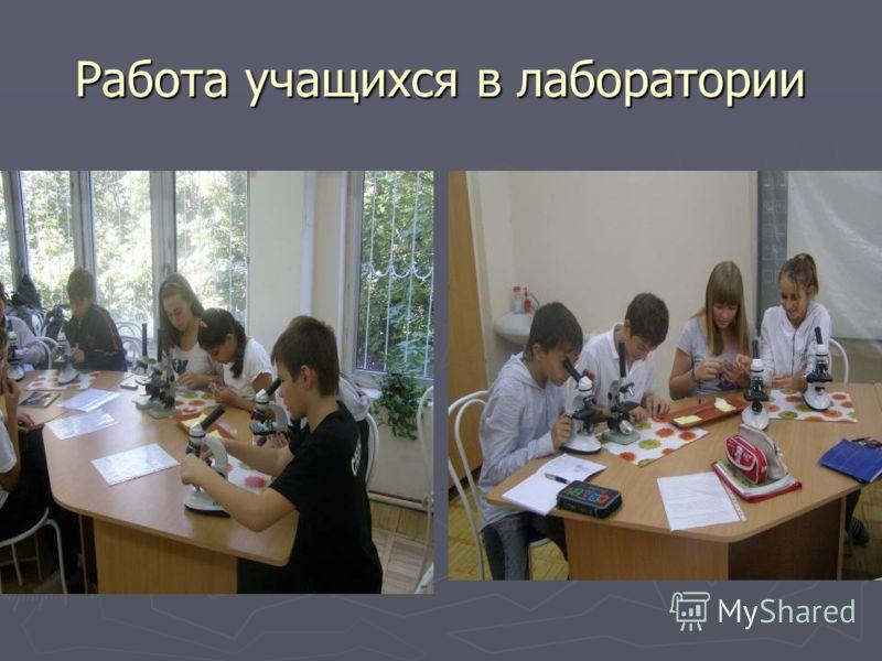 Работа учащихся в лаборатории