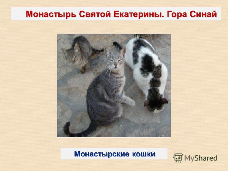 Монастырь Святой Екатерины. Гора Синай Монастырские кошки