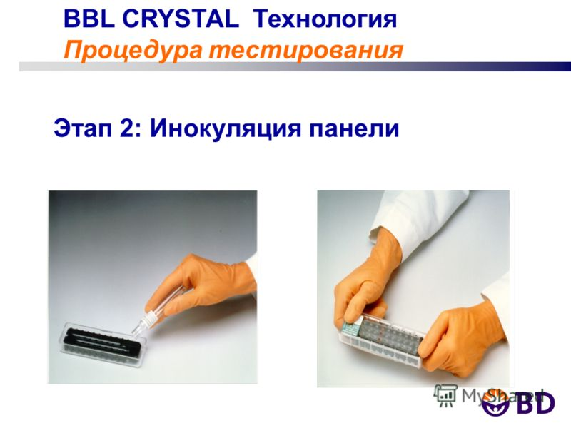 BBL CRYSTAL Технология Процедура тестирования Этап 2: Инокуляция панели
