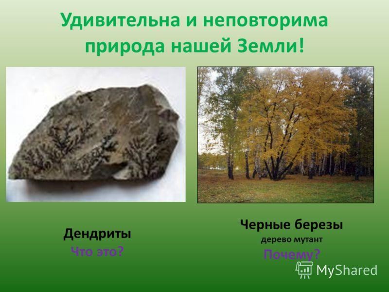Удивительна и неповторима природа нашей Земли! Дендриты Что это? Черные березы дерево мутант Почему?