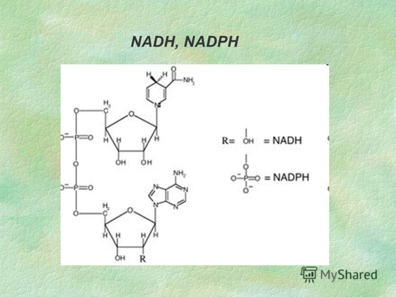 NADH, NADPH