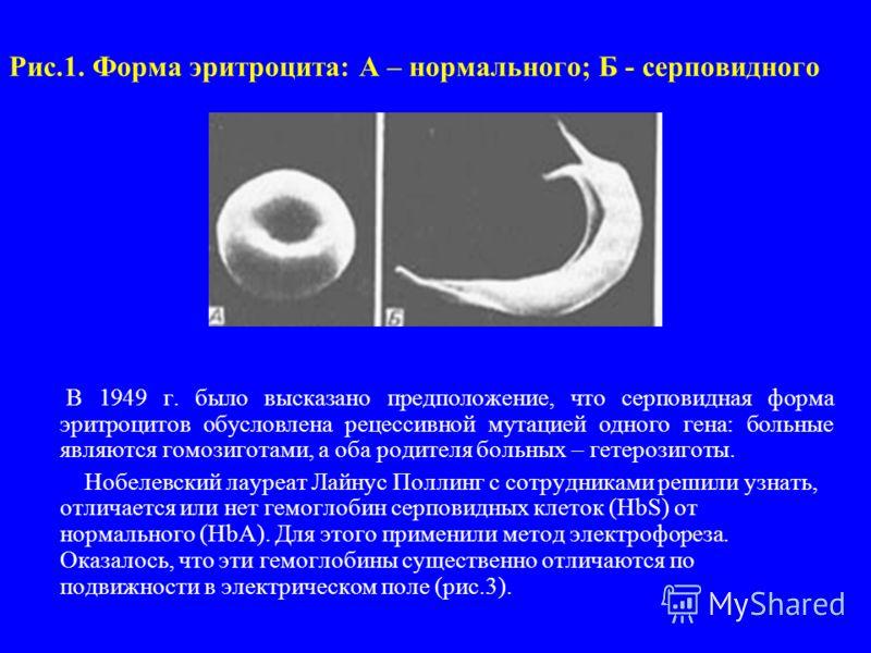 Рис.1. Форма эритроцита: А – нормального; Б - серповидного В 1949 г. было высказано предположение, что серповидная форма эритроцитов обусловлена рецессивной мутацией одного гена: больные являются гомозиготами, а оба родителя больных – гетерозиготы. Н