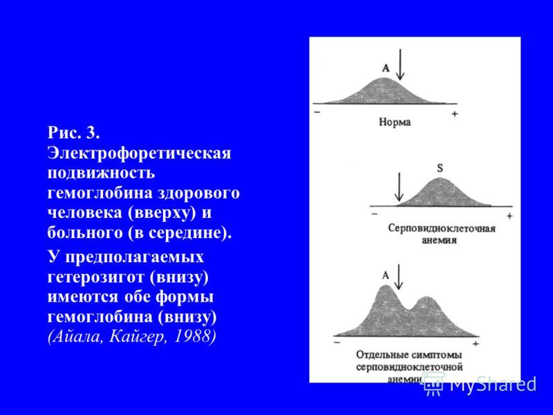 Рис. 3. Электрофоретическая подвижность гемоглобина здорового человека (вверху) и больного (в середине). У предполагаемых гетерозигот (внизу) имеются обе формы гемоглобина (внизу) (Айала, Кайгер, 1988)
