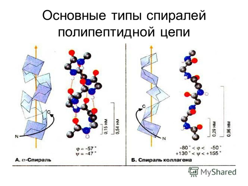 Основные типы спиралей полипептидной цепи