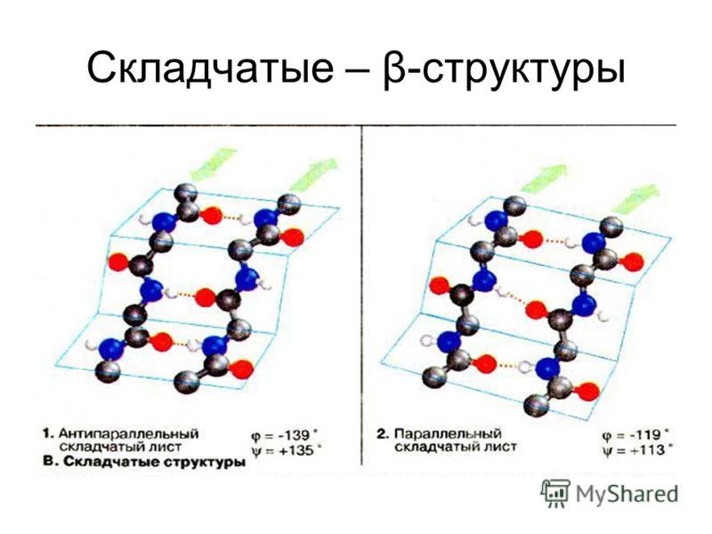 Складчатые – β-структуры