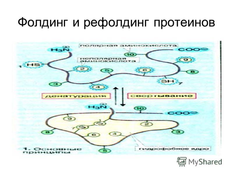Фолдинг и рефолдинг протеинов