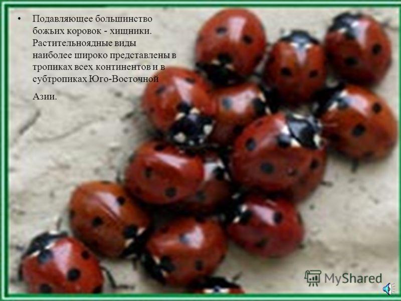 В плане еды среди божьих коровок выделяются: афидофаги (питаются тлями), кокцидофаги (питаются червецами и щитовками), миксоэнтомофаги (питаются широким кругом насекомых), акарифаги (питаются клещами), фитофаги (питаются растительной пищей)