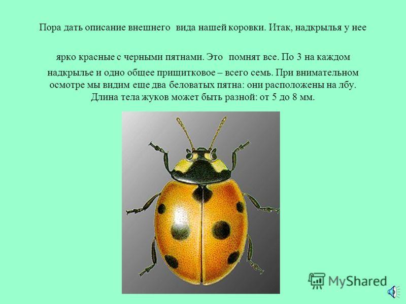 У всех народов мира эти жуки пользуются большой симпатией и любовью. Об этом говорят сами их названия в разных странах - всегда уважительные и ласковые. Жук Святой Девы Марии - в Германии, Австрии, Швейцарии. Леди жук - в Англии, США, Австралии, Южно