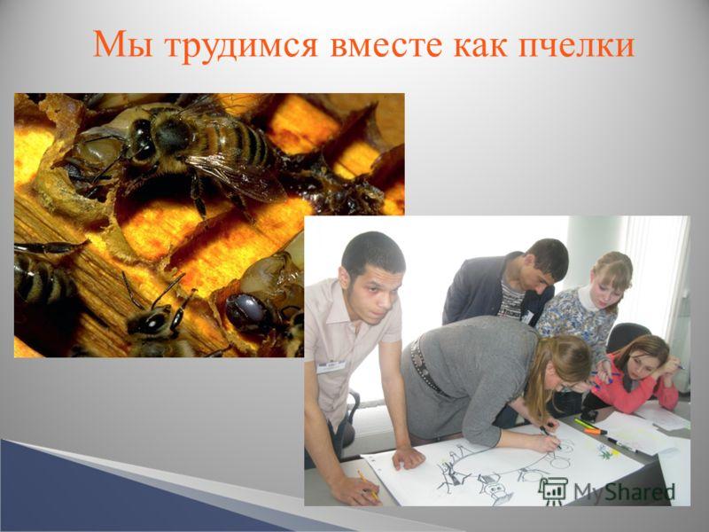 Мы трудимся вместе как пчелки