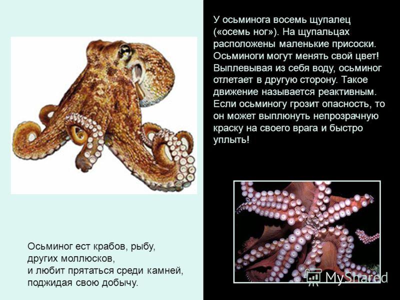 У осьминога восемь щупалец («осемь ног»). На щупальцах расположены маленькие присоски. Осьминоги могут менять свой цвет! Выплевывая из себя воду, осьминог отлетает в другую сторону. Такое движение называется реактивным. Если осьминогу грозит опасност