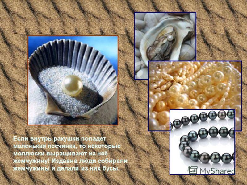 Если внутрь ракушки попадет маленькая песчинка, то некоторые моллюски выращивают из неё жемчужину! Издавна люди собирали жемчужины и делали из них бусы.