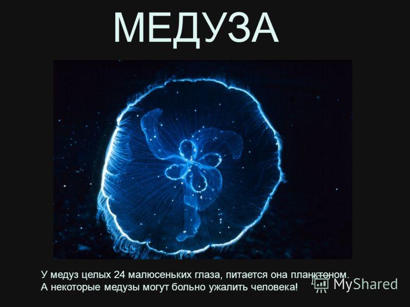 У медуз целых 24 малюсеньких глаза, питается она планктоном. А некоторые медузы могут больно ужалить человека! МЕДУЗА