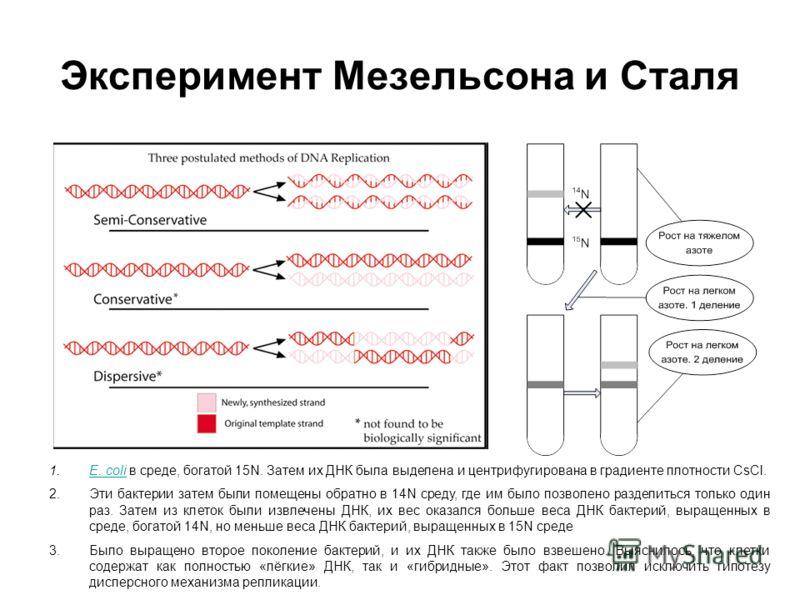 Эксперимент Мезельсона и Сталя 1.E. coli в среде, богатой 15N. Затем их ДНК была выделена и центрифугирована в градиенте плотности CsCl.E. coli 2.Эти бактерии затем были помещены обратно в 14N среду, где им было позволено разделиться только один раз.