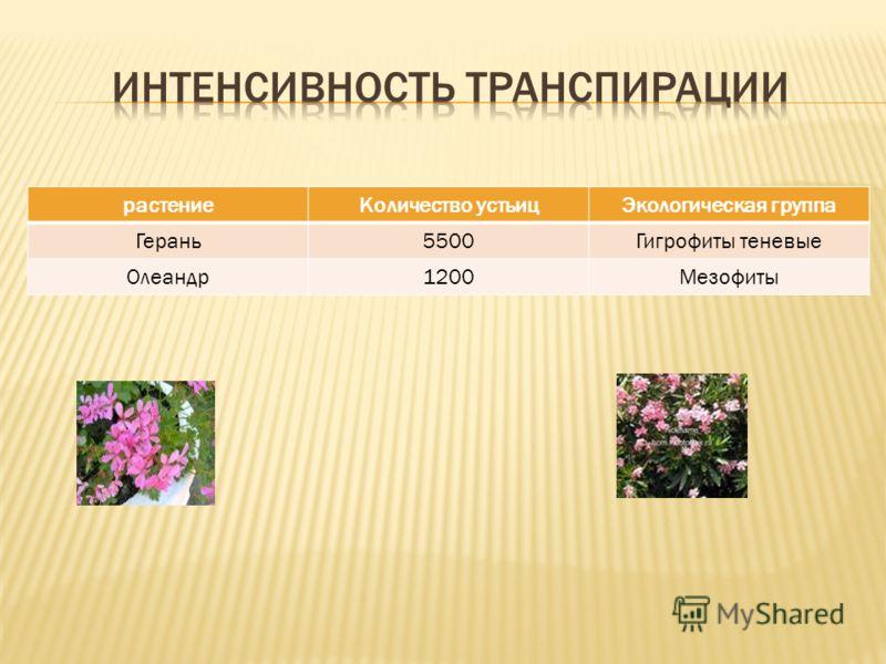 растениеКоличество устьицЭкологическая группа Герань5500Гигрофиты теневые Олеандр1200Мезофиты