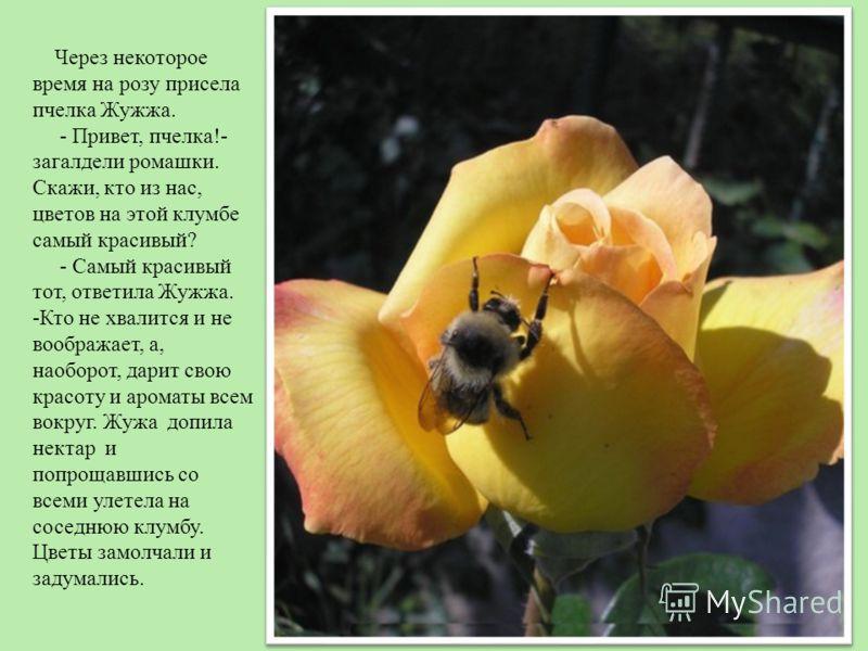 Через некоторое время на розу присела пчелка Жужжа. - Привет, пчелка!- загалдели ромашки. Скажи, кто из нас, цветов на этой клумбе самый красивый? - Самый красивый тот, ответила Жужжа. -Кто не хвалится и не воображает, а, наоборот, дарит свою красоту