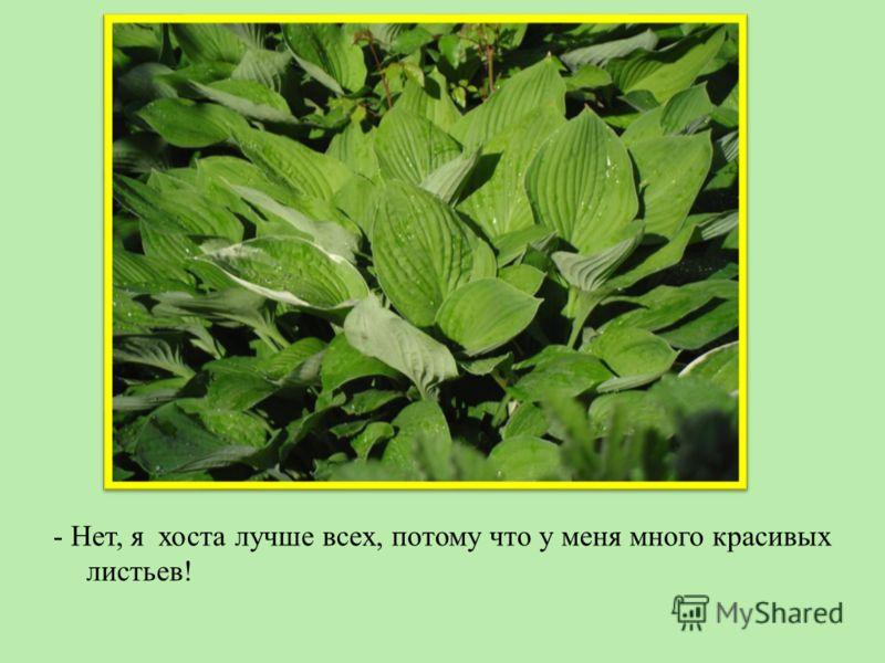 - Нет, я хоста лучше всех, потому что у меня много красивых листьев!
