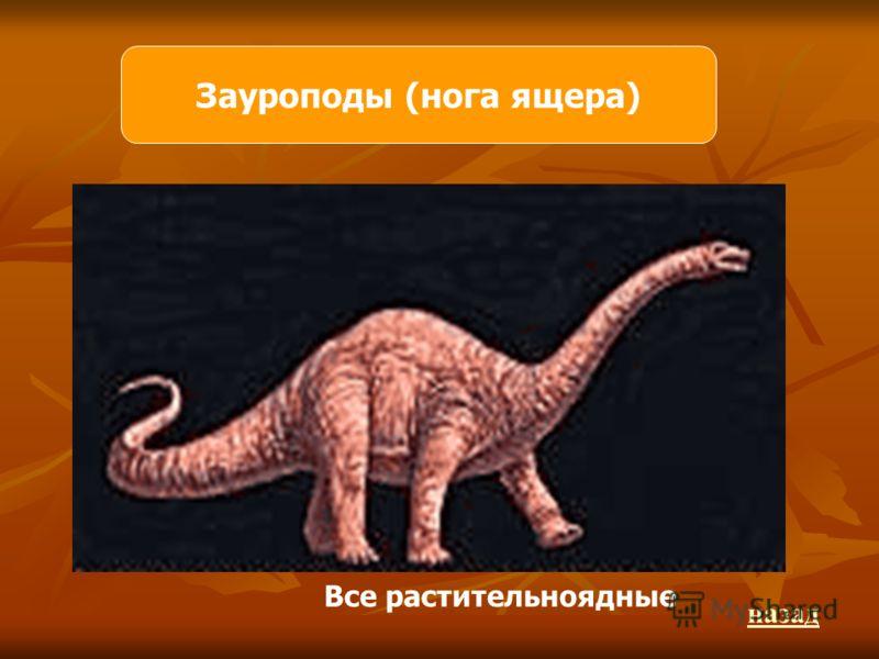 Зауроподы (нога ящера) Все растительноядные назад