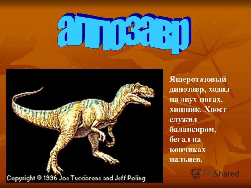 Ящеротазовый динозавр, ходил на двух ногах, хищник. Хвост служил балансиром, бегал на кончиках пальцев.