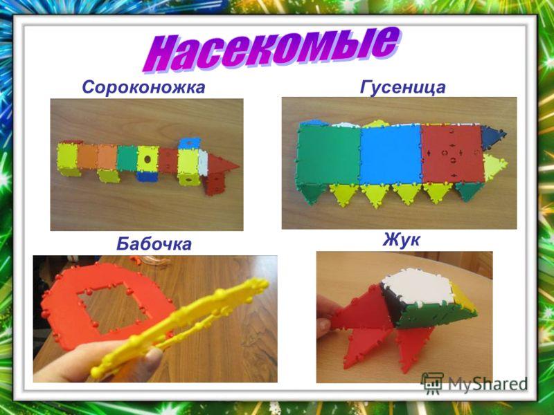 Жук Бабочка ГусеницаСороконожка