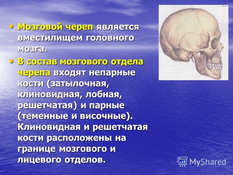 Мозговой череп является вместилищем головного мозга. Мозговой череп является вместилищем головного мозга. В состав мозгового отдела черепа входят непарные кости (затылочная, клиновидная, лобная, решетчатая) и парные (теменные и височные). Клиновидная