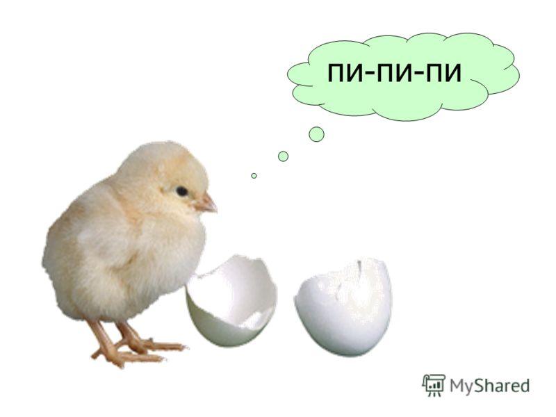ЦЫПЛЕНОК ПИЩИТ